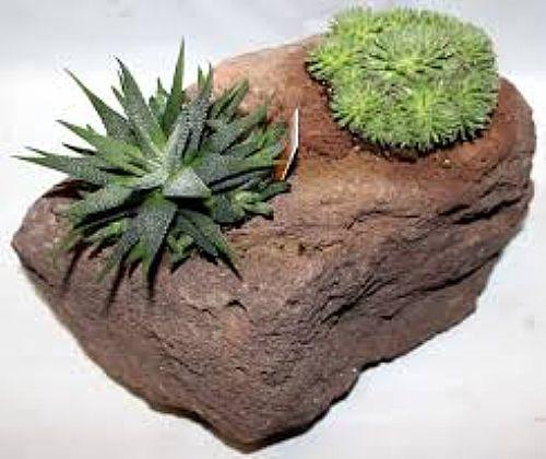Lavasteine zum Bepflanzen