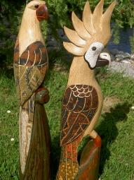 Papagei und Kakadu